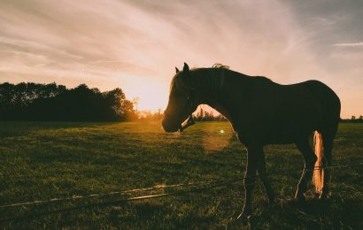 Speelgoed als je fan bent van paarden